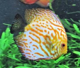 Georgia-Aquarium-Fish