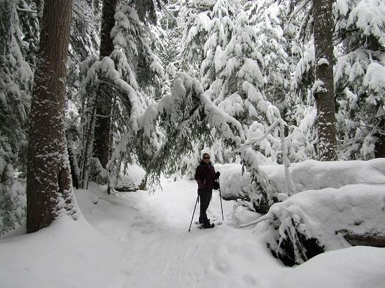 Me-Cougar-Trail-far