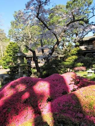 SF-Japanese-Garden-1