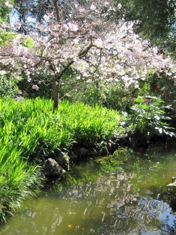 SF-Japanese-Garden-14