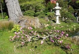 SF-Japanese-Garden-5
