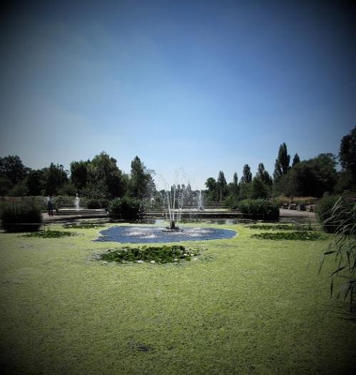 A Hyde Park Pond