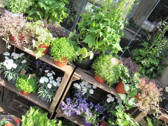 A garden shop in Bath
