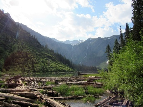 Trees in Avalanche Lake