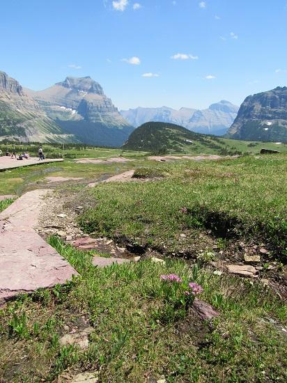 Glacier-Alpine-Meadow