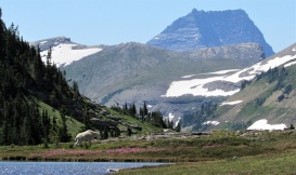 Glacier-Mountain-Goat-Pond