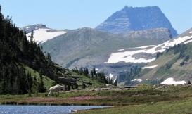 Glacier-Mountain-Goat-Pond
