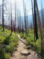 Glacier-Trail