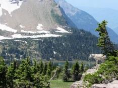 Mountain-Goat-Hidden-Lake