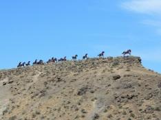 Wild Horses, Vantage, Washington