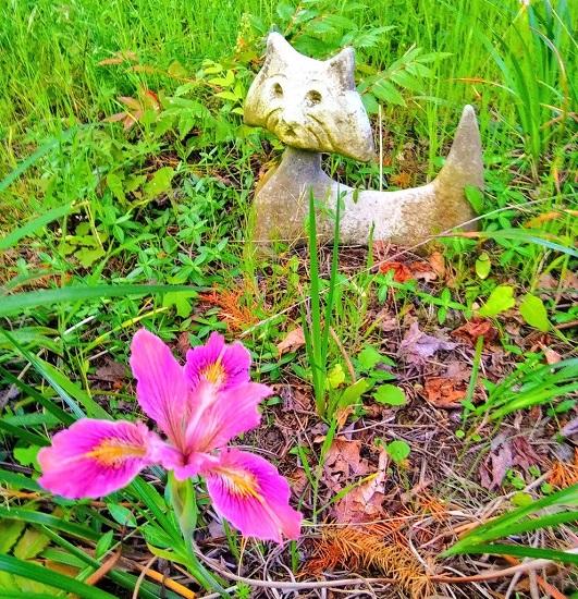 Iris-Cat-Statuary