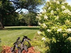 Newfields-Garden-Lawn
