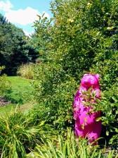 Newfields-Garden-Pink-Bear