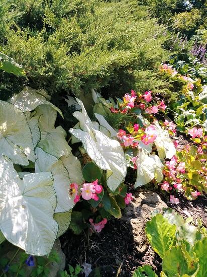 Oldfields-Border-Garden