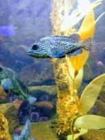 Seaside-Aquarium2