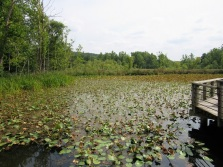Beaver Marsh - Cuyahoga Valley National Park