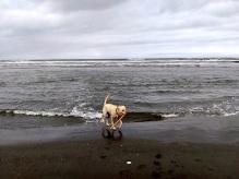 She loves fetch!