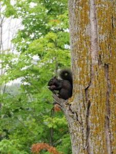 Niagara-Falls-Squirrel