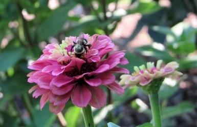 Shelburne-Museum-Bumblebee
