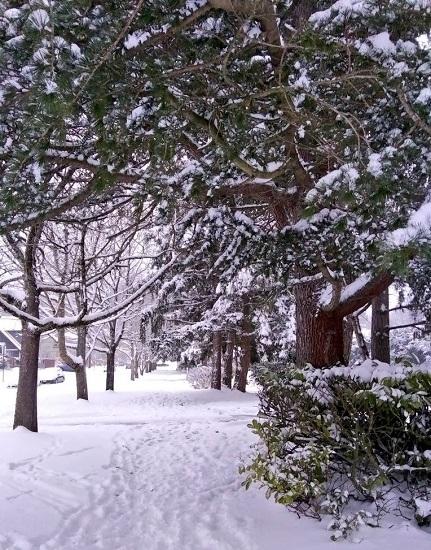 2-2021-Snowday-Trees