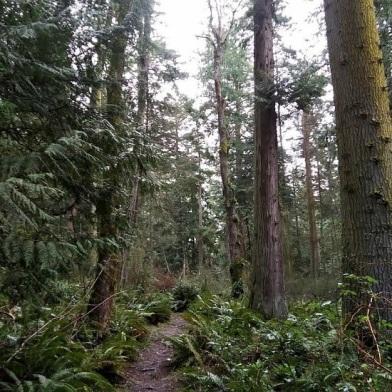 Camano-Island-SP-Trail