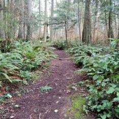 Camano-Island-SP-Woods