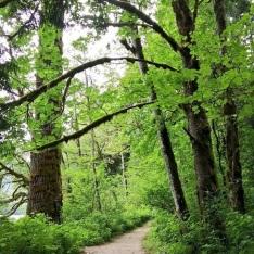 Rasar-SP-Trees