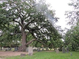 Salem-Cemetery-Tree