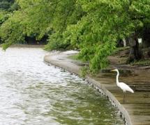 DC-Mall-Egret