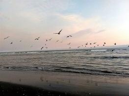 Fort-Stevens-Beach